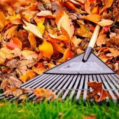 Leaf Removal Website Image